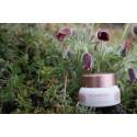 PINK CAMELLIA SOOMBI BLOOMING FLOWER CREAM