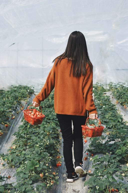 MiiN Trade Gardening